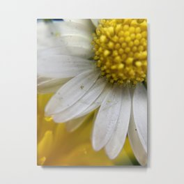 Daisies, Love, & Math Metal Print