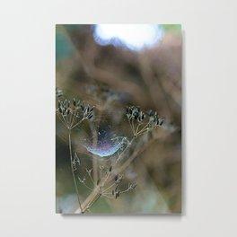 Spiderwebs and Raindrops Metal Print