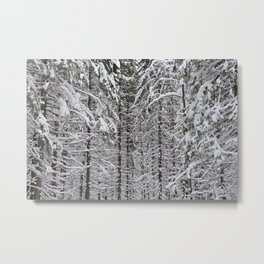 Wintery forest  background Metal Print