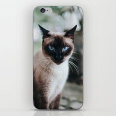 Blue-eyed Cat iPhone & iPod Skin