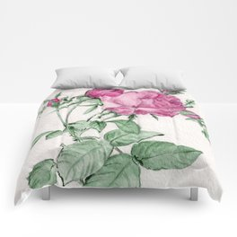 Rosa Centifolia Foliacea Comforters