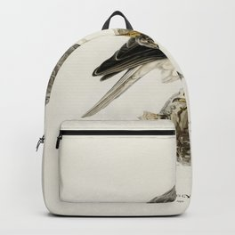 Little stint (tringa minuta) illustrated by the von Wright brothers Backpack