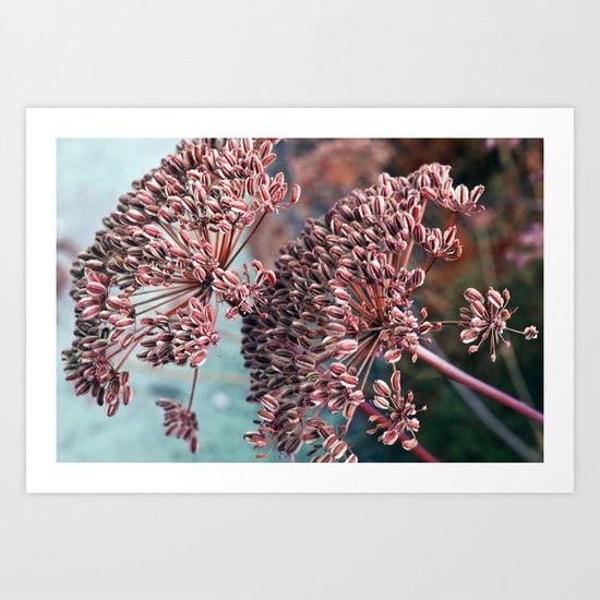 FLOWERHEAD - Botanical Garden Art Print