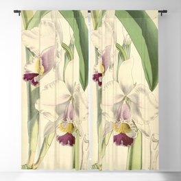 Cattleya candida (as Cattleya quadricolor) Curtis' 91 (Ser. 3 no. 21) pl. 5504 (1865) Blackout Curtain