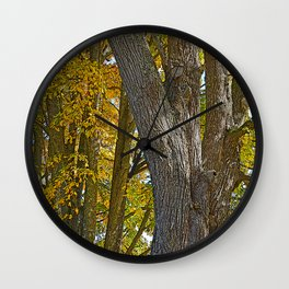 AUTUMN ACER MACROPHYLLUM (AUTUMN BIGLEAF MAPLE) Wall Clock