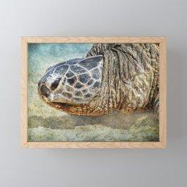 Green Sea Turtle Portrait Framed Mini Art Print