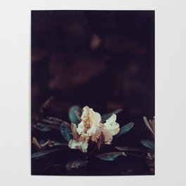 Moody White Flowers in the Sunlight Poster
