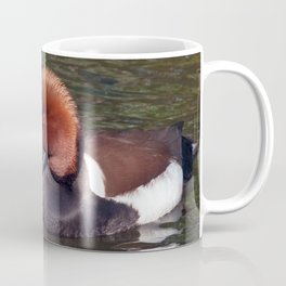 Red-crested Pochard Coffee Mug