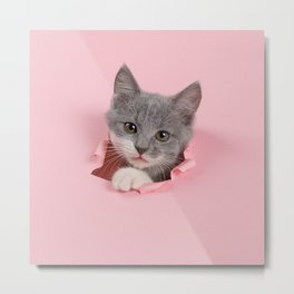 Gray Kitten Metal Print