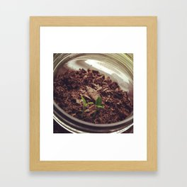 Sprouts  Framed Art Print