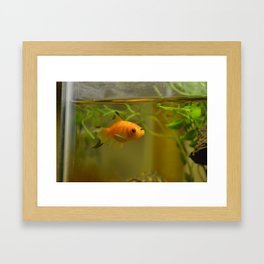 Reincarnation? Framed Art Print