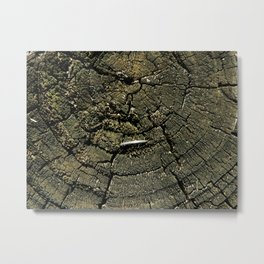 Wood Spiral Metal Print