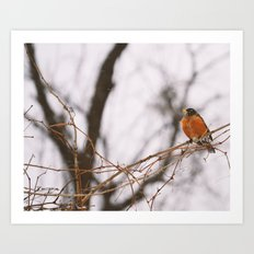 Robin in Winter Art Print