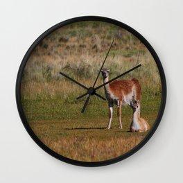 Guanaco family Wall Clock