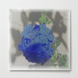 Plumbago - Or - Stick 'ems Metal Print
