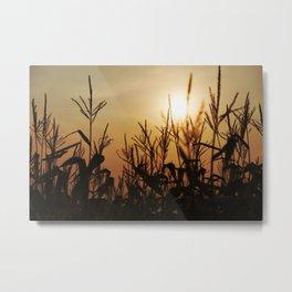 Corn Field 11 Metal Print