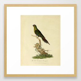 """""""The Red-Shouldered Paroquet"""" by Sarah Stone, 1790 Framed Art Print"""