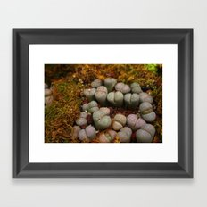 Cactus Stones Framed Art Print