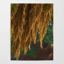Abstract Canopy Of Evergreen Poster
