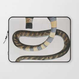 Banded Cobra Capella (Naia tripudians) from Illustrations of Indian zoology (1830-1834) by (1800-187 Laptop Sleeve