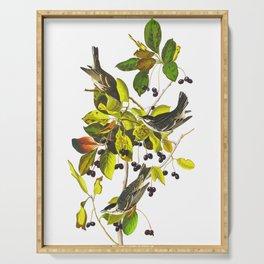Black Poll Warbler John James Audubon Vintage Scientific Hand Drawn Illustration Birds Serving Tray