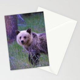 Grizzly bear cub in Jasper National Park | Alberta Stationery Cards