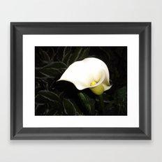 Calla Lily at Night Framed Art Print