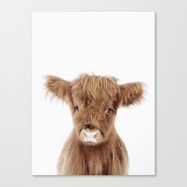 Baby Highland Cow Portrait Canvas Print