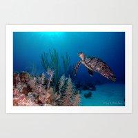 Sea Turtle Heading to the Surface - DeStefanis  Art Print