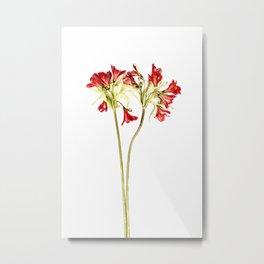 Parrot Lily Metal Print