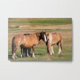 Gypsy_Vanner Horses 0271 - Colorado Metal Print