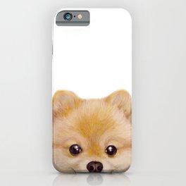 Pomeranian Dog illustration original painting print iPhone Case