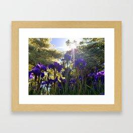 Iris Light Framed Art Print