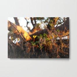Love of mangroves  Metal Print