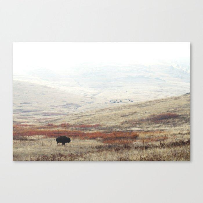 Lone Bison on The National Bison Range in Montana Leinwanddruck