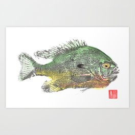 Red Breasted Sunfish 1 Art Print