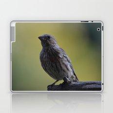 An Immature House Finch Laptop & iPad Skin