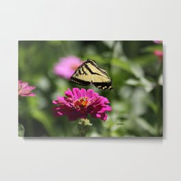 Colorful Swallowtail Butterfly Flying Metal Print