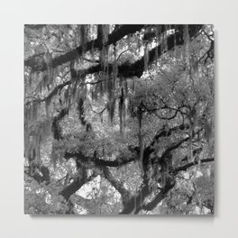 Oak and Moss in Black and White, Study 2 Metal Print
