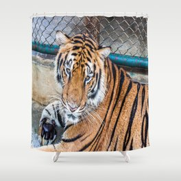 Tiger, My Bottom is Not Made Out of Springs Shower Curtain
