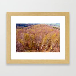 Deciduous beech forest view in spring, forest landscape Framed Art Print