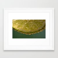 lime green Framed Art Prints featuring Lime! by Caroline Benzies Photography