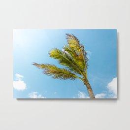 Palm Tree, Blue Sky Metal Print
