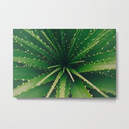 Aloe Metal Print