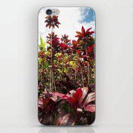 Red Ti Tropical Gardens Hawaiian ti plant Wailua Maui Hawaii iPhone Skin