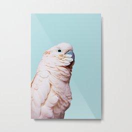 Parrot Photography | Pink Bird |  Tropical | Exotic | Turquoise Art | Blush Pink Metal Print
