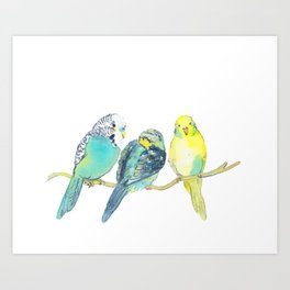 budgie family watercolor Art Print