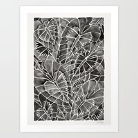 Schismatoglottis Calyptrata – Black Palette Art Print