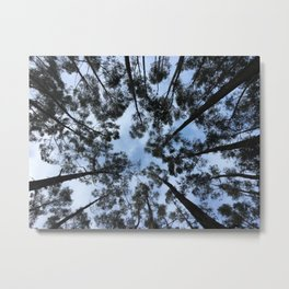 Q'enqo Trees Metal Print