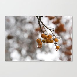 Red in Ice Canvas Print
